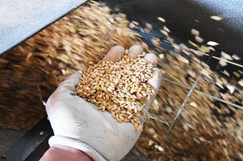 こまち農園の「無農薬米」。霧島ヒノヒカリ
